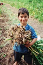 A month of fun days .there's lots to do in Massachusetts in September! childgarlic.jpg
