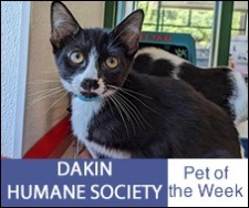 Pet of the Week petoftheweek-227x190.jpg